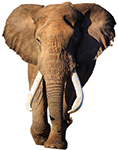 """The """"Ivory Ban"""""""